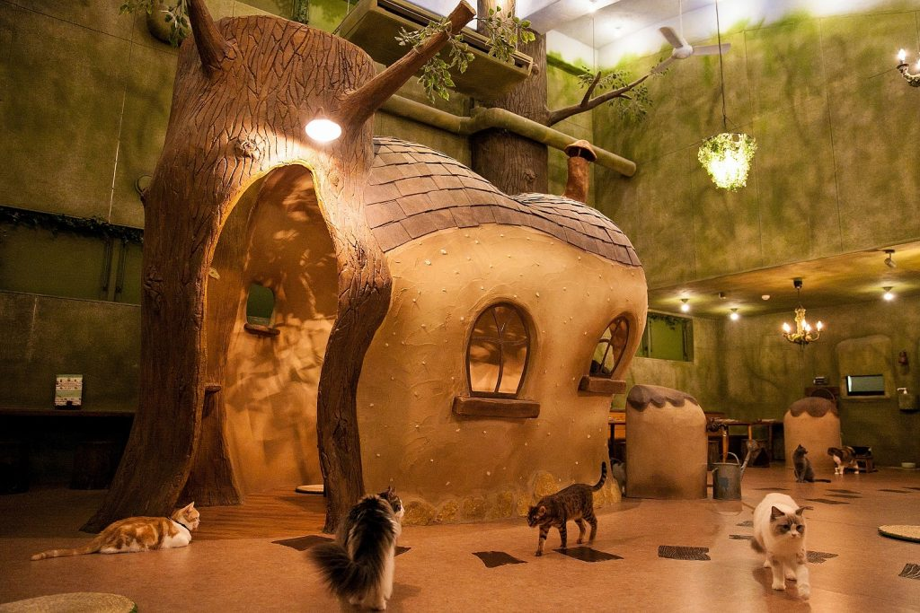 Cat Cafe in Tokyo (Photo credit: Time Out)