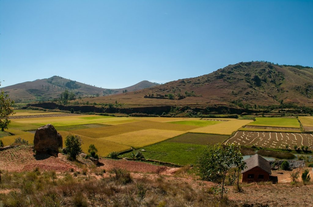Madagascar countryside and rice fields