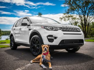 Best cars for your dog