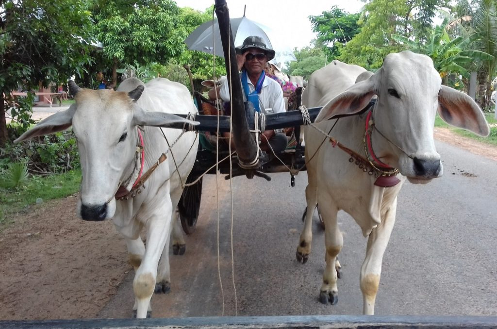 Oxcart ride through village