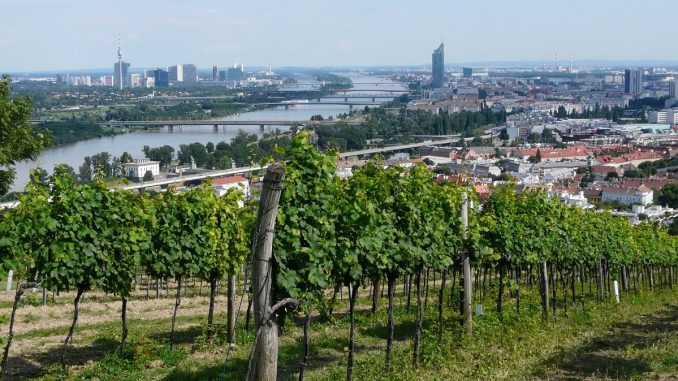 Austrian wines in Nussberg Hill in Vienna