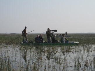 Birdwatching in Gujarat