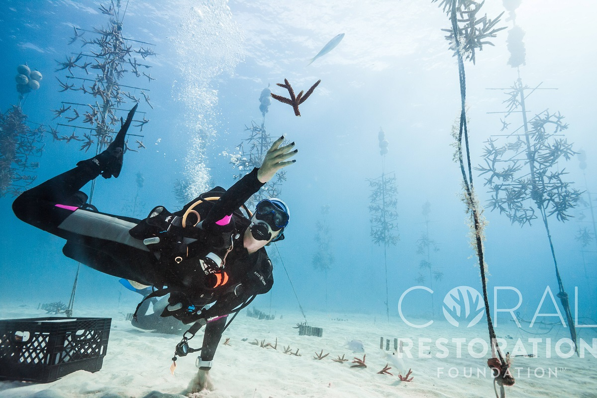 Catching coral