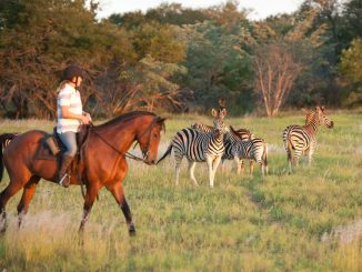 Horizon Horseback in Game Reserve